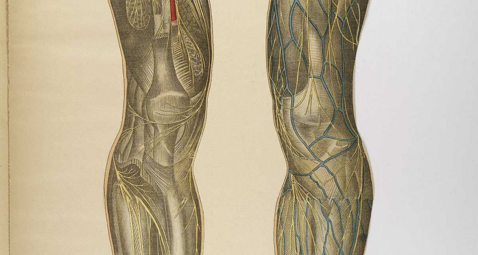 veins and arteries of the human body